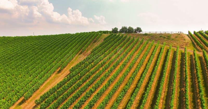Les vignobles sur les collines italiennes photographie stock