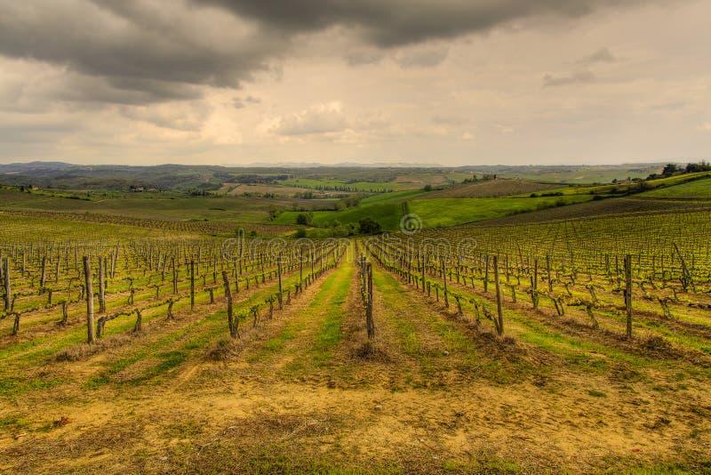 Les vignobles toscans images stock