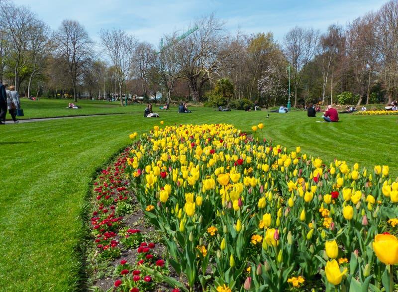 Les visiteurs apprécient la beauté du parc de Phoenix, en Dublin City, avec ses fleurs de ressort et lits de tulipe photographie stock