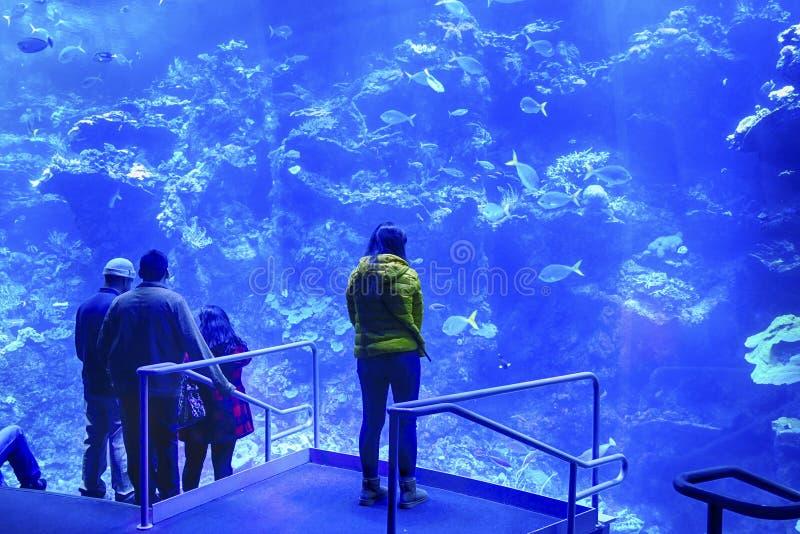 Les visiteurs ont vue sur la barrière de corail photographie stock libre de droits