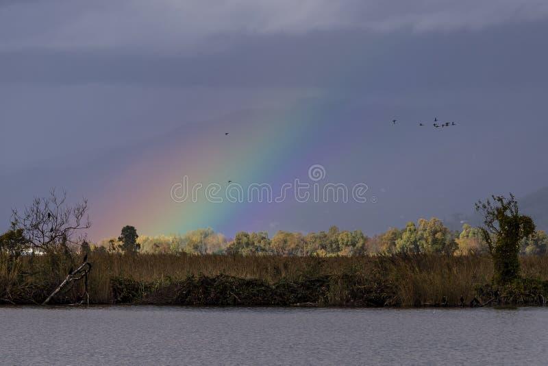 Les volées des oiseaux volent dans un ciel illuminé par un bel arc-en-ciel, lac Massaciuccoli, Toscane, Italie image libre de droits