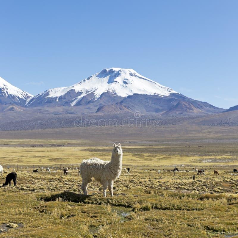 Les volcans couronnés de neige Parinacota et Pomerane bolivia image libre de droits