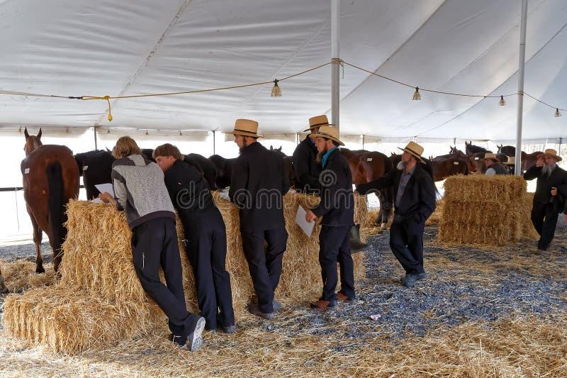 Download Les Volontaires Amish Tendent Des Chevaux à Vendre Photo stock éditorial - Image du culturel, fundraiser: 87703508