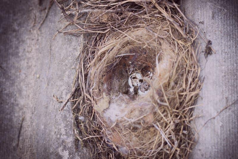 Les vrais magots du ` s d'oiseau sont cassés Profondeur de zone Plan rapproché photographie stock