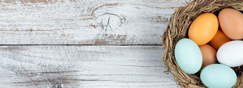 Les vrais oeufs dans l'oiseau nichent sur le fond en bois rustique blanc photo stock