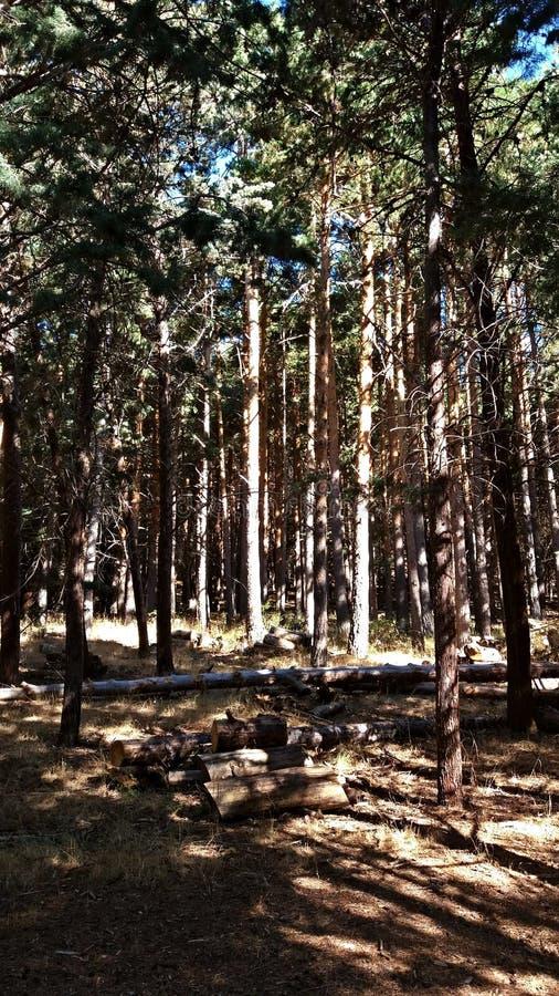 Les vues de la forêt pendant un trekking montent image libre de droits