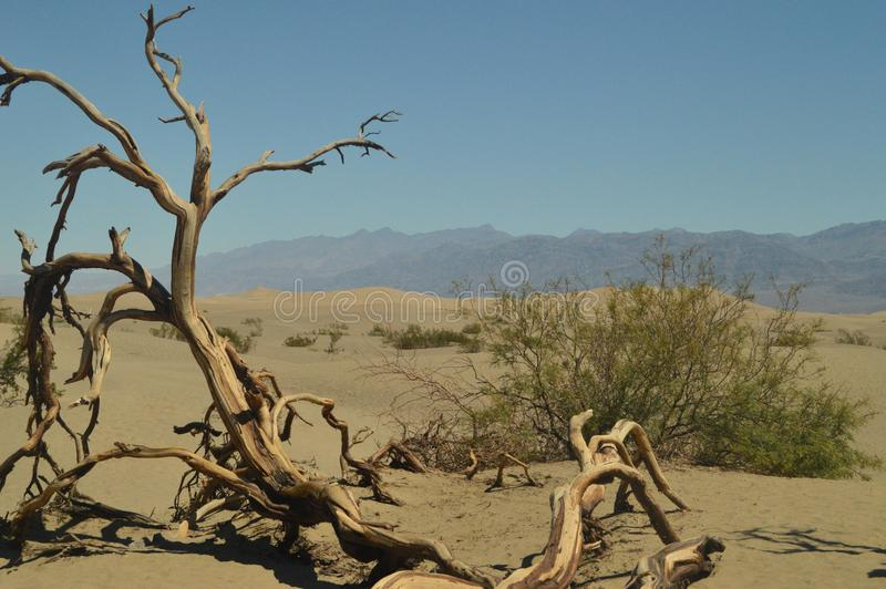 Les vues merveilleuses du désert de Mohave sèchent le tronc Le plus bas endroit au-dessous du niveau de la mer Lagunes gigantesqu photo stock