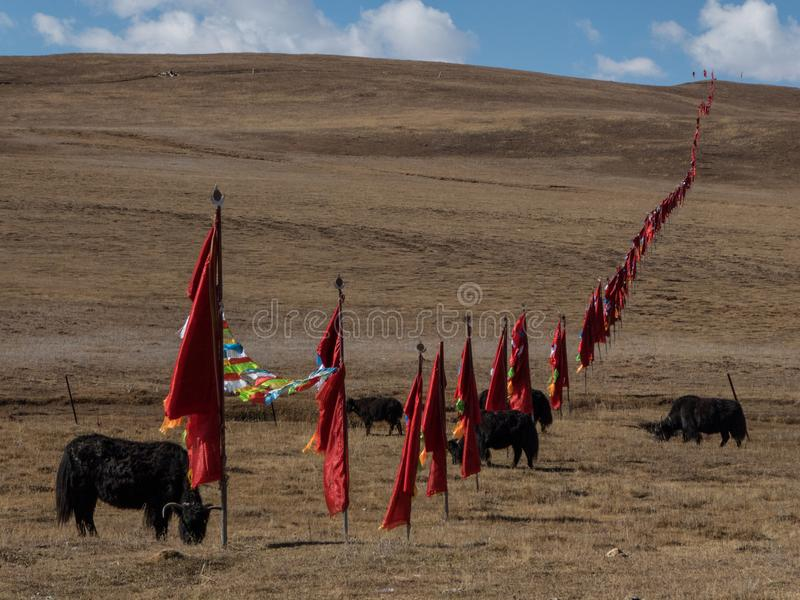 Les yaks sur le pré et les montagnes illimitées, Sichuan occidental P photo stock
