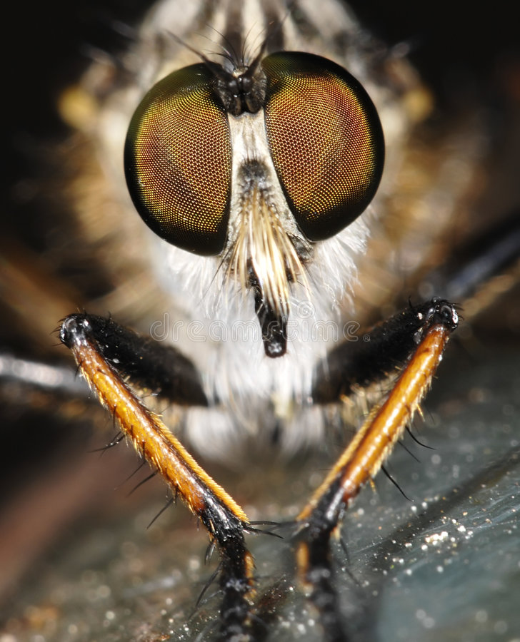 Les yeux de la mouche images stock