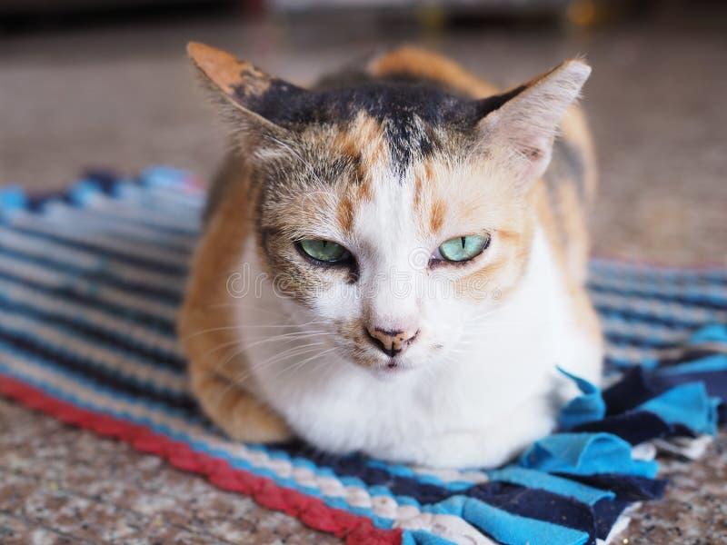 Les yeux du chat qui regarde fixement images stock