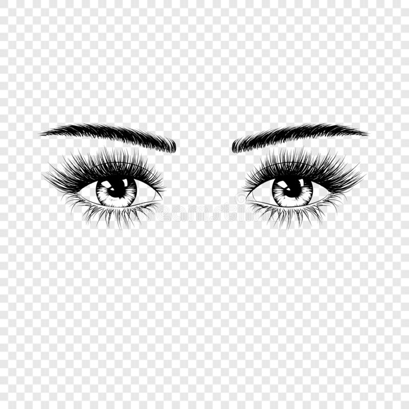 Les yeux femelles silhouettent avec des cils et des sourcils Illustration de vecteur d'isolement sur le fond transparent illustration stock