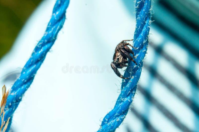 Les yeux sautants d'araignée image libre de droits