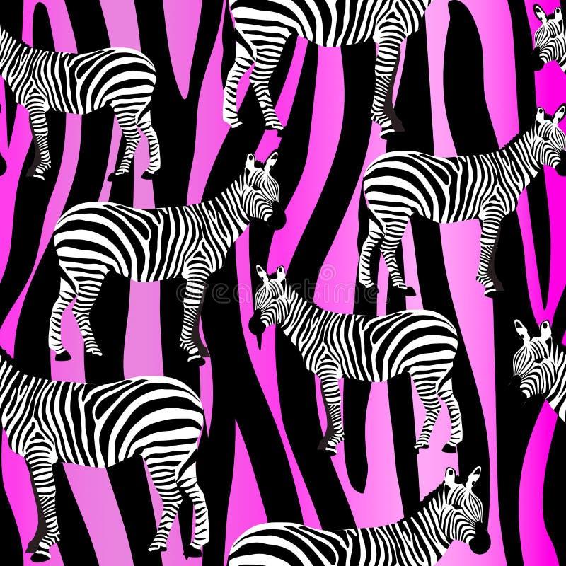 Les zèbres sur le modèle extérieur sans couture de zèbre de rayures pourpres roses de rayures, les zèbres noirs et blancs répèten illustration libre de droits