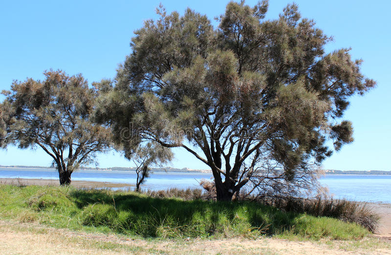 Leschenault Estuary Bunbury West Aust. The view of the Leschenault Estuary near Bunbury West Australia shows the view from the rocky walkway across the blue stock photography