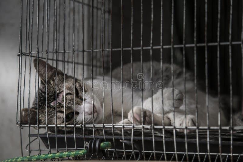 Lesión en la cabeza del gato enferma y sola en la jaula vieja, baja y muy mala imagenes de archivo