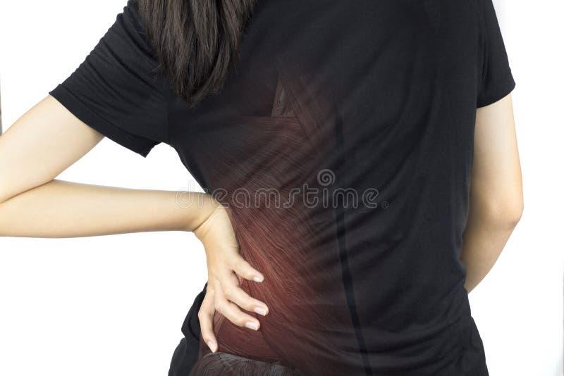 Lesi?n del m?sculo de la espina dorsal imagenes de archivo