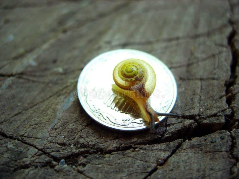lesma do molusco do caracol em uma moeda fotografia de stock