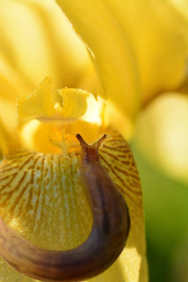 Lesma em uma flor imagens de stock