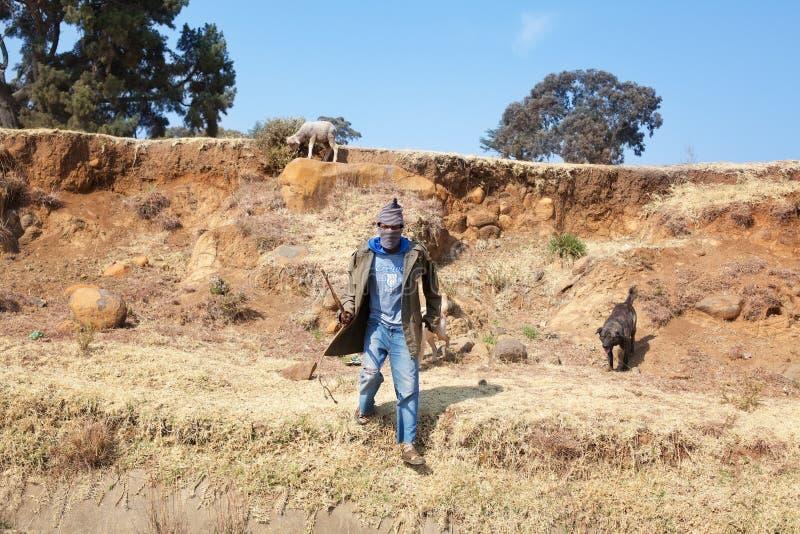 Lesotho afrikansk ung herdeman i det nationella ullbalaclavalocket, hunden och får, steniga stenlutningsDrakensberg berg royaltyfri foto