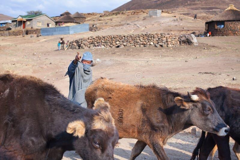 Lesotho, hombre africano joven del pastor en casquillo combinado de lana nacional del vestido y del pasamontañas en el alto rebañ imágenes de archivo libres de regalías