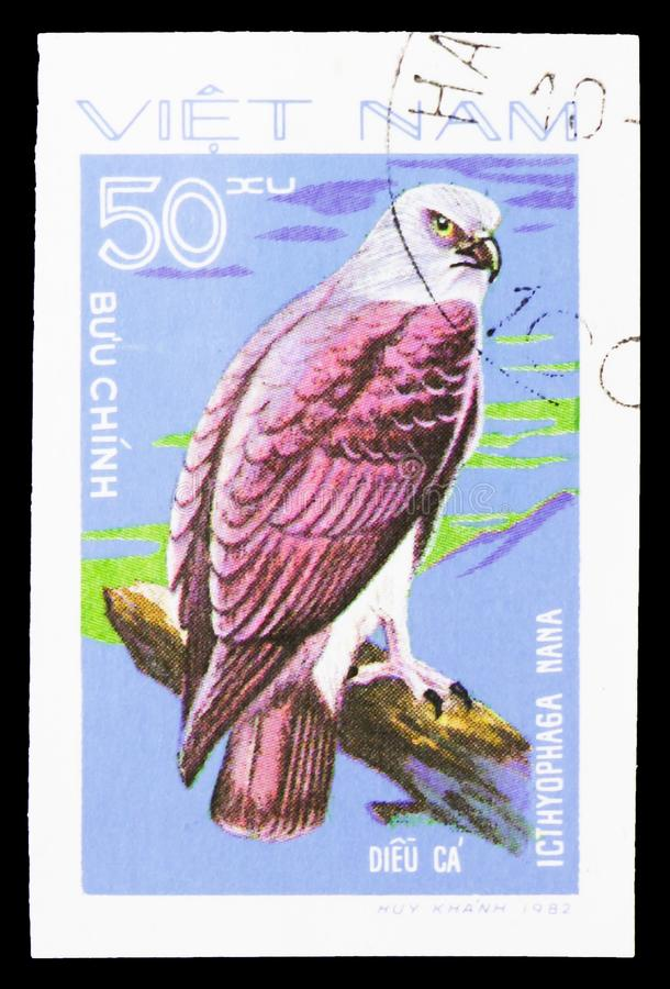 Lesser Fish Eagle (Icthyophaga nana), Birds of Prey serie, circa 1982. MOSCOW, RUSSIA - SEPTEMBER 26, 2018: A stamp printed in Vietnam shows Lesser Fish Eagle ( royalty free stock photo