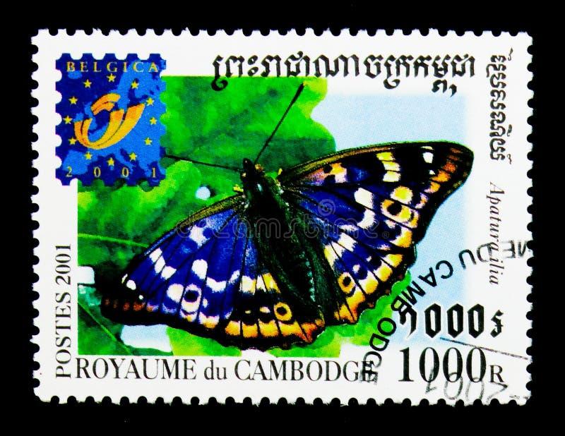 Lesser Purple Emperor (Apatura Ileia), Vlinder - Belgica, Bruss royalty-vrije stock afbeeldingen
