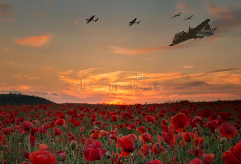 Lest We Forget war planes flying over red poppy field. Lest we forget,scene of bomber planes flying over a poppy field as the sun goes down, Anzac day and royalty free stock photo