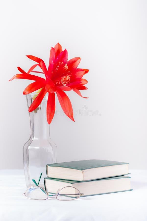 Lesung macht das Leben bunter lizenzfreie stockfotografie