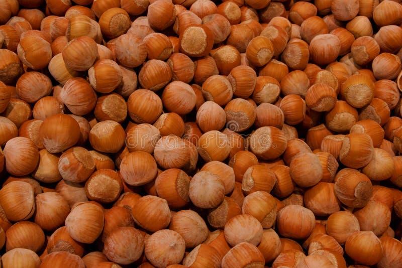 leszczyny Świeży organicznie filbert Dokrętki makro- knedle tła jedzenie mięsa bardzo wiele fotografia royalty free