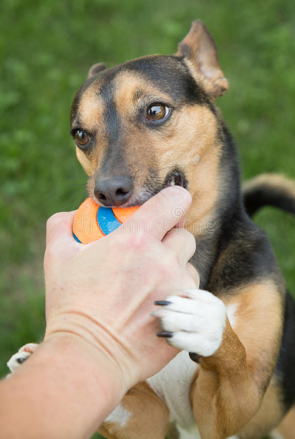 Let`s Play Fetch Now Please! royalty free stock photography