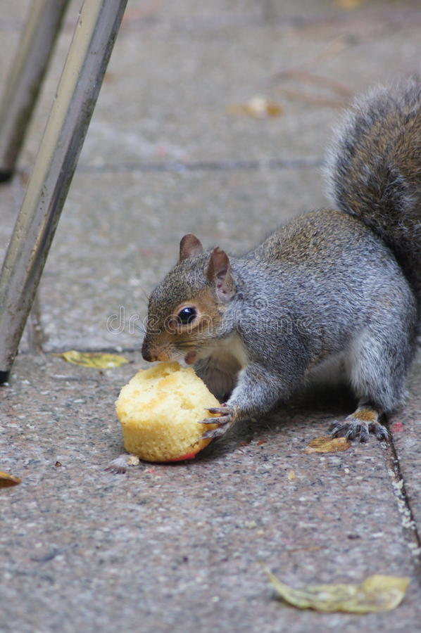 Let them eat cake. No. I didn& x27;t mean the squirrel. stock photo
