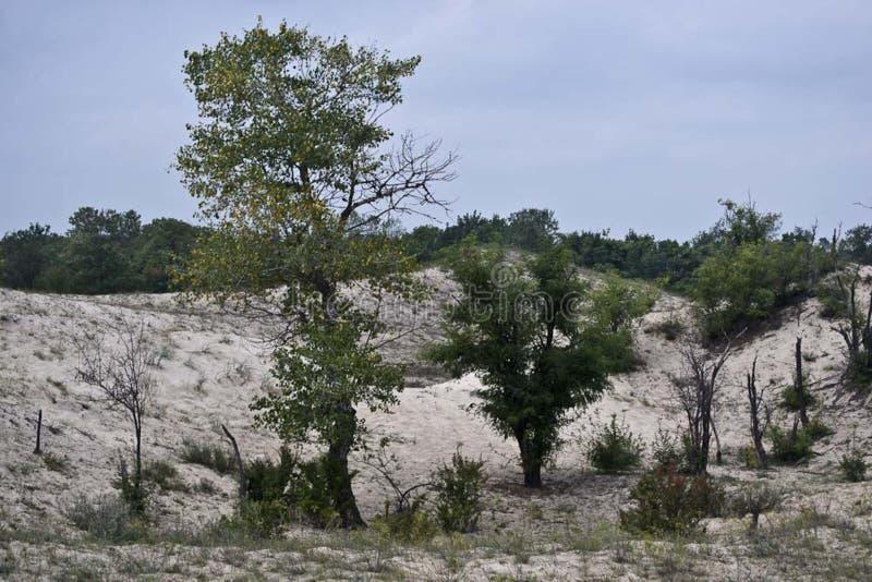 Letea Forest sand dunes vegetation stock image
