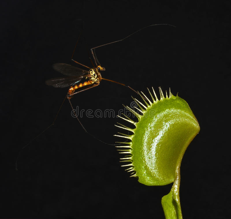 Download Lethal trap stock photo. Image of animals, entrapment - 21816622