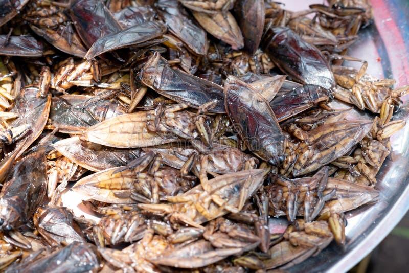 Lethocerus, Pimpa, insecte d'eau géante comme nourriture sur le marché local Thaïlande photographie stock libre de droits