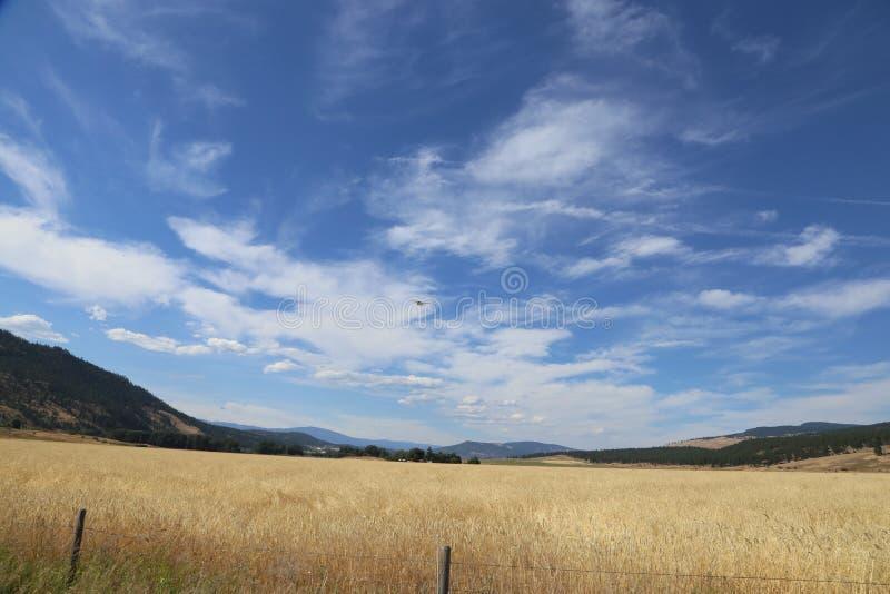 Letni dzień w Kanada z niebieskim niebem - turystyka zdjęcia stock
