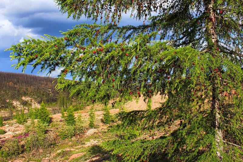 Letni dzień w lesie obrazy stock