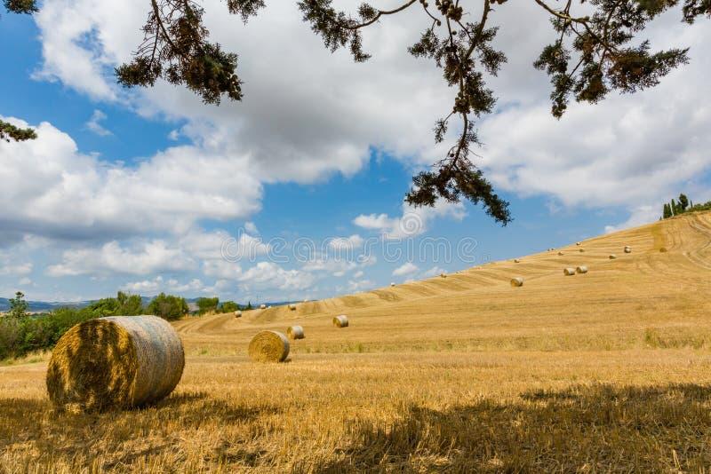 Letni dzień z Toskańskimi hayfields fotografia royalty free