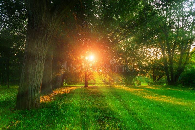 Letni krajobraz - kolorowy letni park miejski z liściastymi zielonymi drzewami w słoneczny wieczór Drzewa parkowe zdjęcie stock