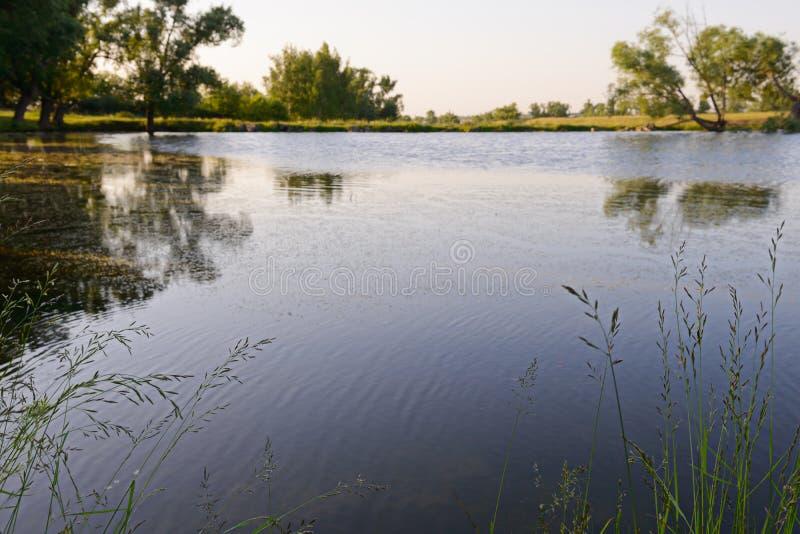 Letni krajobraz ze stawem i zielonym brzegiem fotografia royalty free