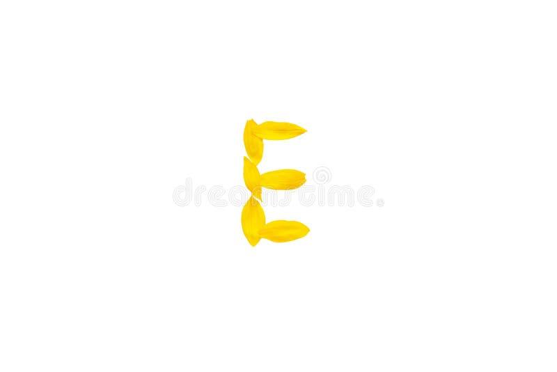Letra amarilla E de fuentes de los pétalos del girasol, elemento del alfabeto, aislante decorativo de la fuente de la belleza de  foto de archivo