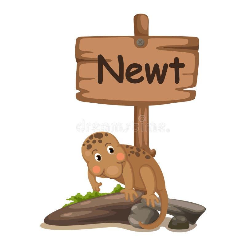 Letra animal N del alfabeto para el newt ilustración del vector