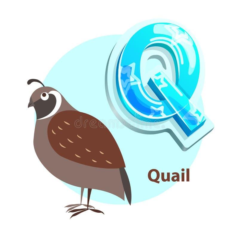 Letra de Q con el pájaro de las codornices para el aprendizaje del alfabeto ilustración del vector