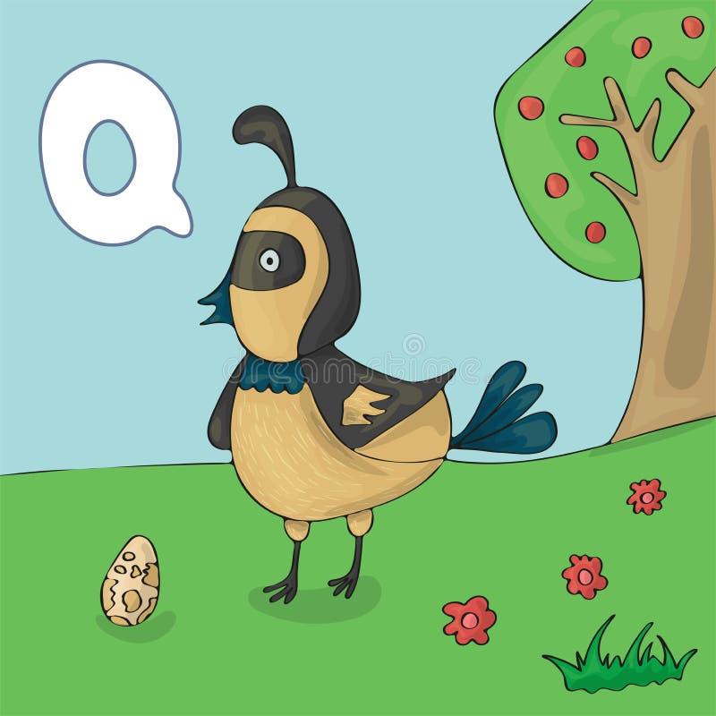 Letra ilustrada Q do alfabeto e codorniz Desenhos animados do vetor da imagem do livro de ABC Codorniz na grama e em seu ovo Cria ilustração do vetor