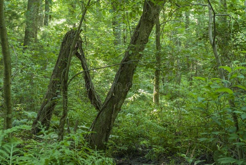 Letra N da formação dos troncos de árvore fotografia de stock