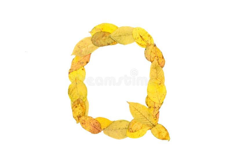 Letra Q feita das folhas caídas outono Alfabeto imagem de stock royalty free