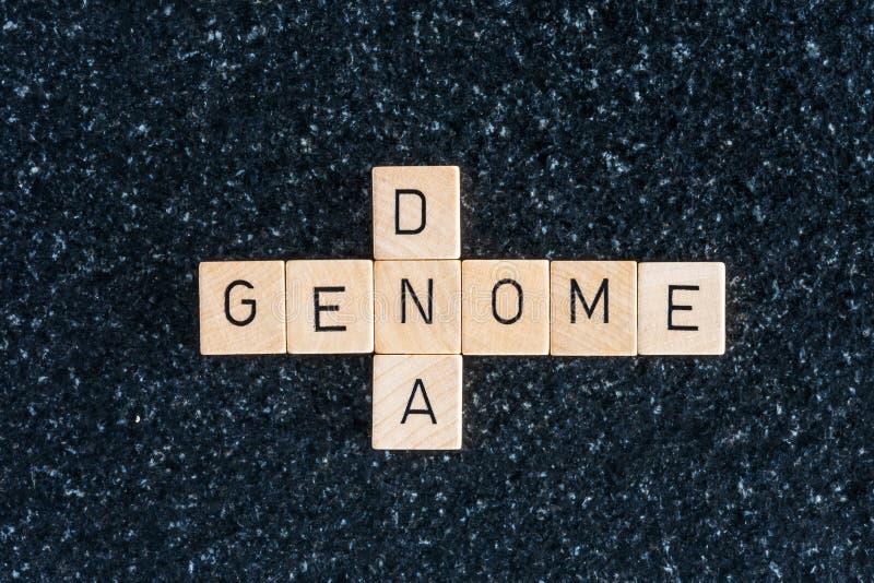 Letras de madera que forman palabras del genoma y de la DNA fotografía de archivo libre de regalías
