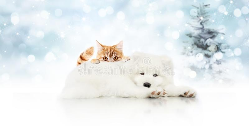Letrero de la Feliz Navidad o tarjeta de regalo para la tienda de animales, perro blanco a fotos de archivo libres de regalías