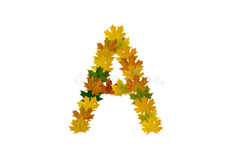 Letter A from autumn maple leaves isolated on white background. Alphabet from green, yellow and orange leaves vector illustration