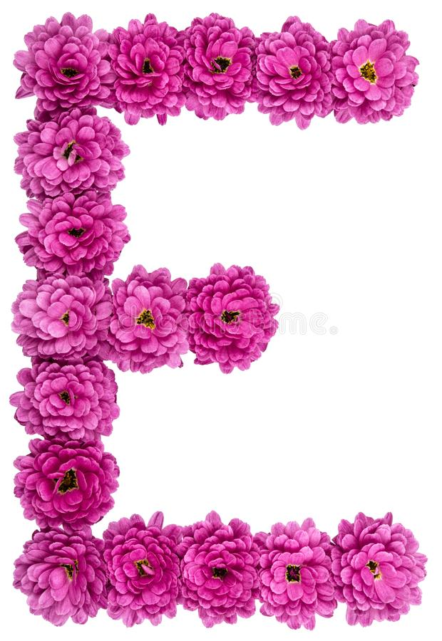 Download Letter E Alphabet From Flowers Of Chrysanthemum Isolated On Wh Stock Photo