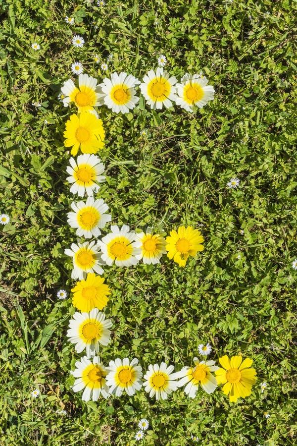 Letter E flower alphabet. Letter E from complete flower alphabet royalty free stock image